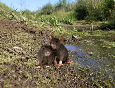 Fauna landschapspark floreert