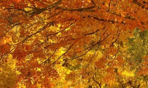 Afbeeldingsresultaat voor 22 september herfst