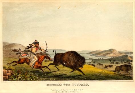 buffalo-hunt