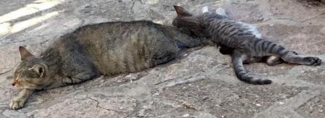 kattendag