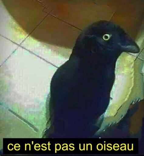 geen vogel