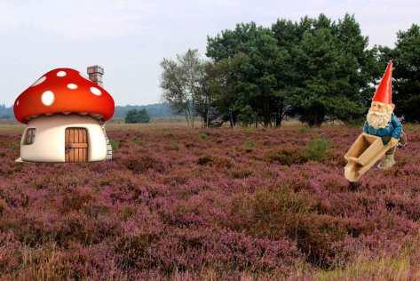 Heide-in-bloei