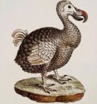dodoaward