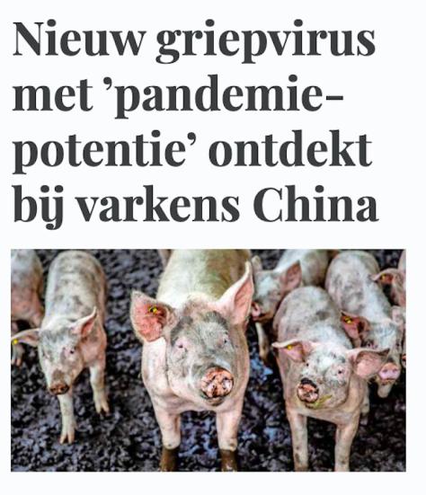 varkensgriep